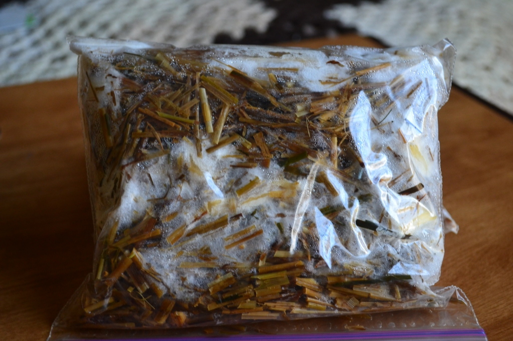 This bag contains wheat straw and was inoculated with several pieces of oyster mushroom mycelium. 8 days after preparing this bag, 'islands' of mycelium are developing and growing into each other.