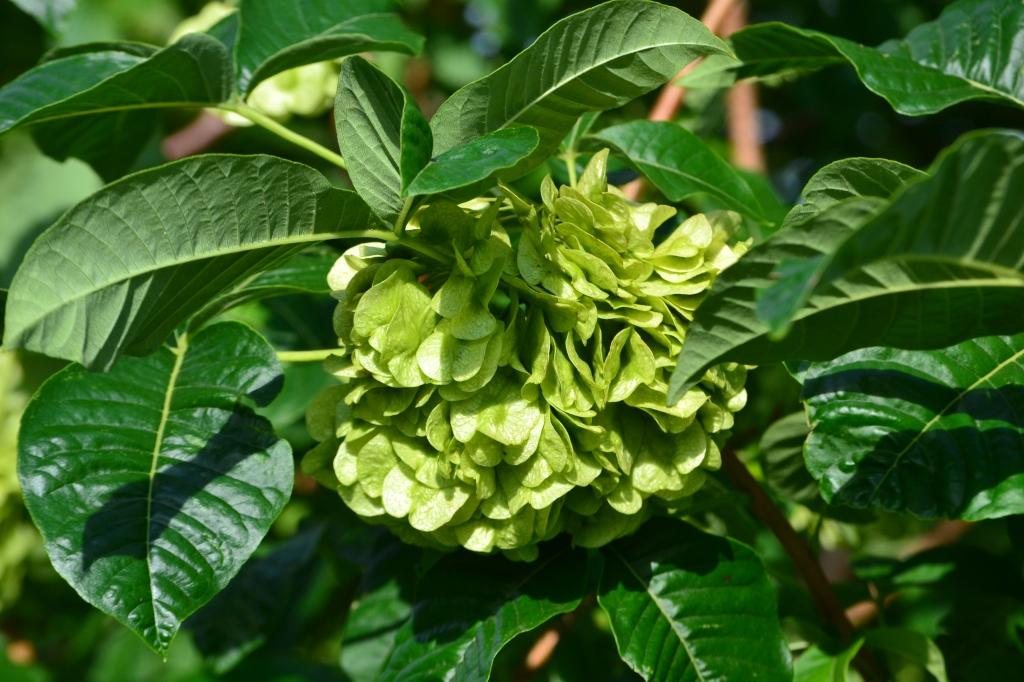 hoptree3